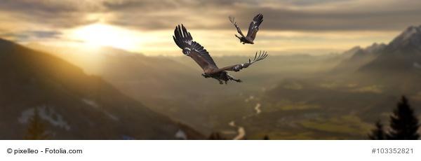 Neulich im Starbucks gelernt: Vom Adler und dem Frosch